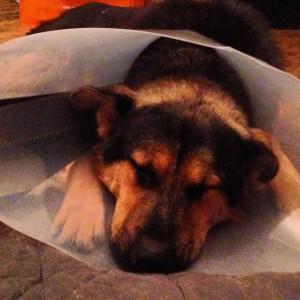 Тоша приходит в себя после операции