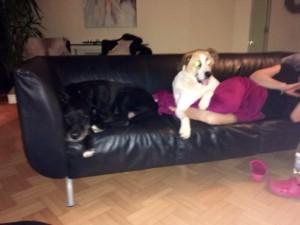 Том(Мартин) с дивана никуда)