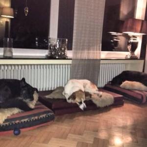 Когда друзья рядом, засыпается быстрее