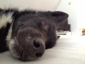 Всем спокойной ночи!