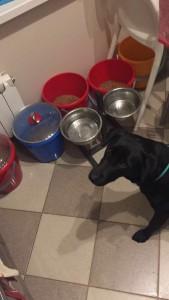 Донна помогает Маше готовить обед для приютских собачек
