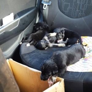 По дороге на передержку. Таких крошек оставили в коробке на солнце.
