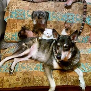 Еще в семье Грея две кошки и собака