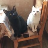 Кошки в переноске