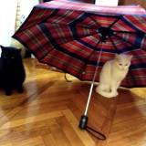 Котики Доооома! Вместе!