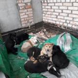 СРОЧНО! 7 щенков молят о помощи