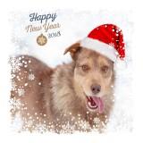 с Новым годом!!🎄🎈