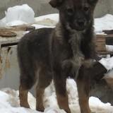 Срочный сбор и поиск финкураторов для 8 щенков