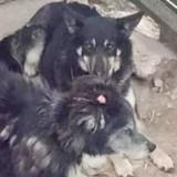 Истинная дружба