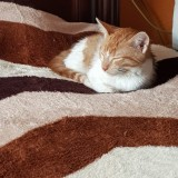 Турецкий котёнок уже дома 🏠