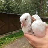 Спасение голубя 🙏