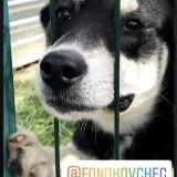 Большой Стольник в помощь собакам